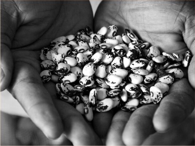 manos con semillas de frijol y la importancia de los sistemas agroalimentarios