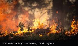 Arde Caño Cristales-reflexiones acerca del día mundial bosques - Cider | Uniandes