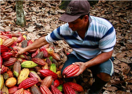 Desarrollo-económico-local-adelco Cider | Uniandes