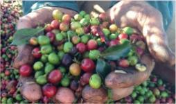 La informalidad laboral pone en riesgo el suministro de comida en el mundo- Cider | Uniandes