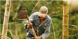 Pandemia: Los retos y oportunidades en los sistemas agroalimentarios - Cider | Uniandes