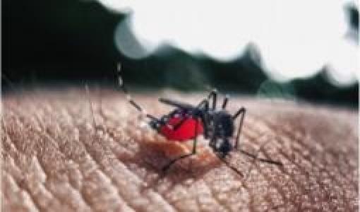 mosquito y dengue en el día del agua - Cider | Uniandes